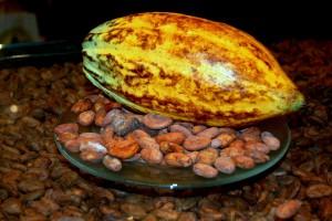 Kakaofrucht_mit_Kakaobohnen